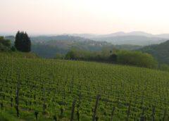 Goriska brda